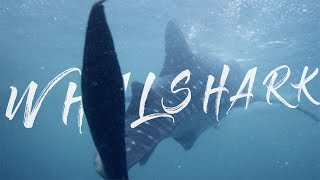 WHALE SHARKS || CEBU PHILIPPINES || Cinematic Travel Movie & Guide