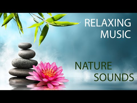 Meditation Music and Nature Sounds - Forest Stream Scene