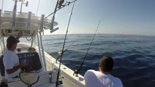 Awsome Sailfish Action out of Stuart Florida on Bi