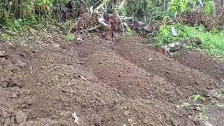 Organic Farming Part 1 [Hanover Jamaica]