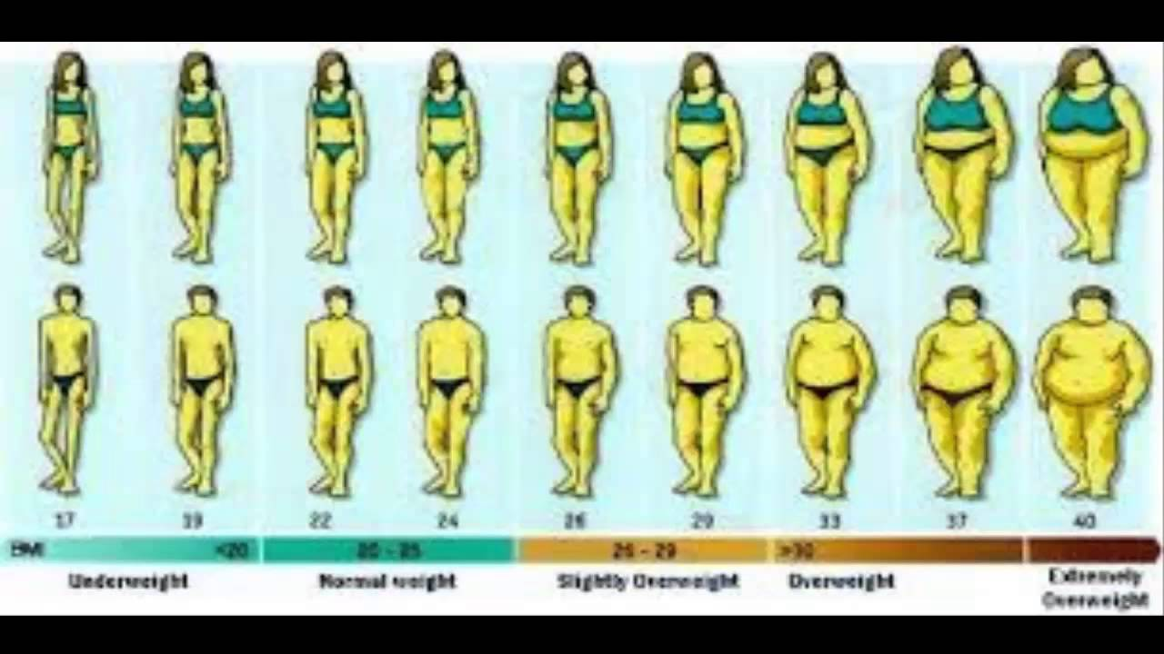height weight chart - YouTube