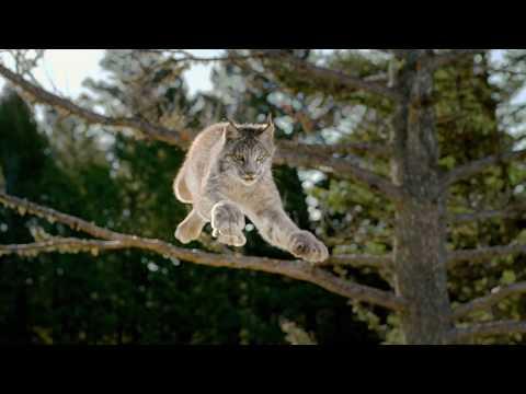 Blue Buffalo Wilderness Cat Food | Lynx Hunger