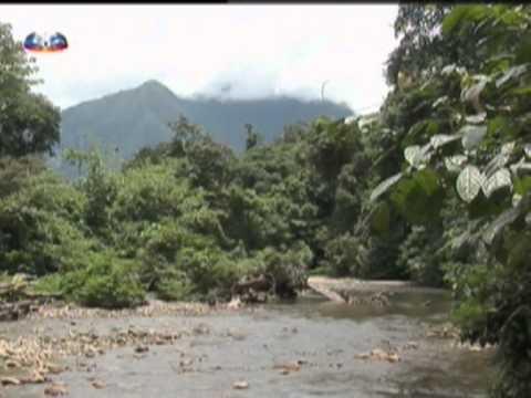 Vida Selvagem - A Floresta Tropical da Malazia
