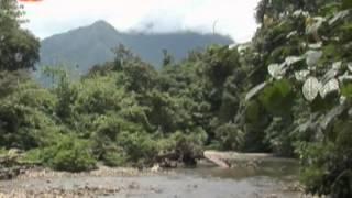 Cooking | Vida Selvagem A Floresta Tropical da Malazia