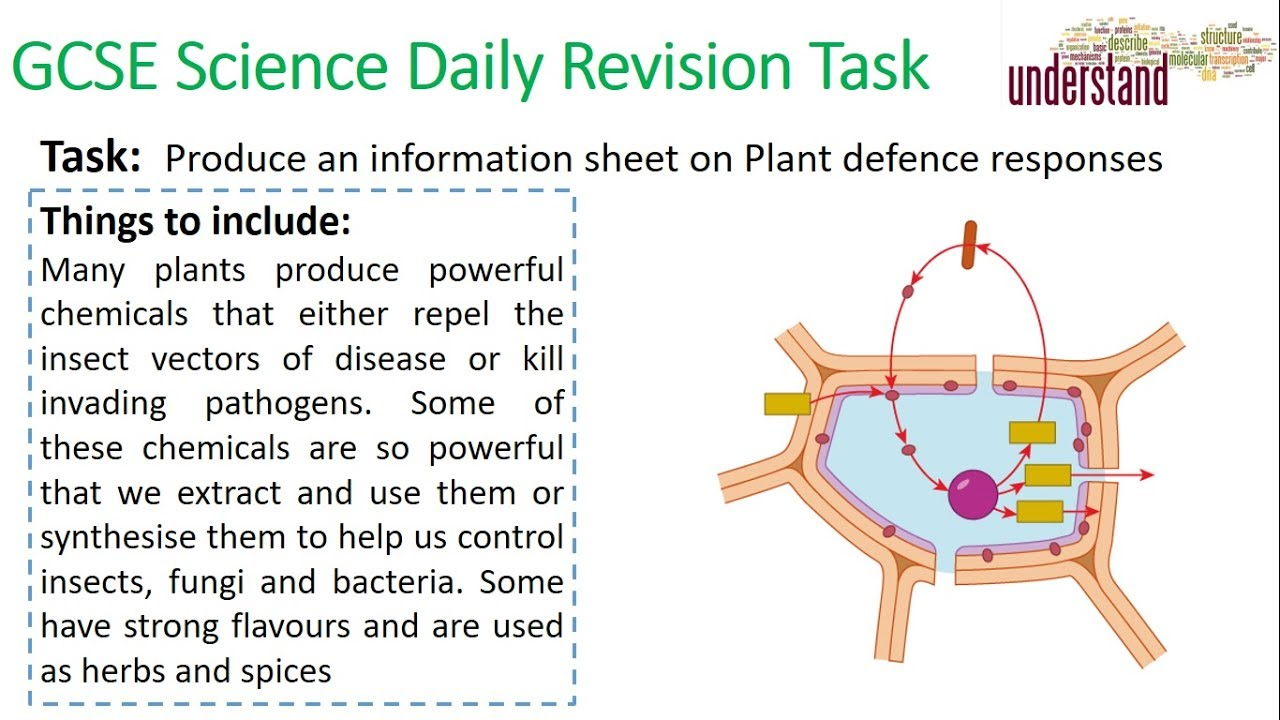 GCSE Daily Revision Task 16:  Plant defences - YouTube
