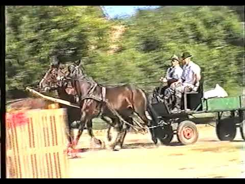 Fogathajtó verseny, Csetény, 2006.    x264