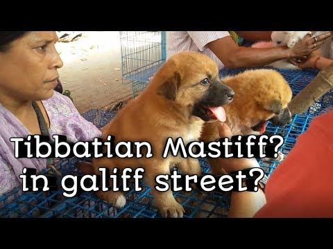 GALIFF STREET CHEAPEST PET DOG MARKET KOLKATA  WITH PRICE || ANIMAL COLONY