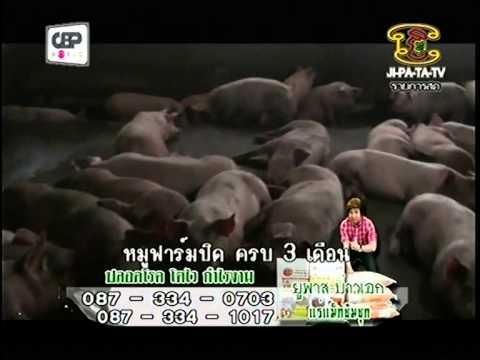 ยูพาส เพื่อเกษตรกรไทย เยี่ยม..ฟาร์มหมู (ปิด) ที่ใช้ ยูพาส