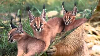 Фильм Животные леса