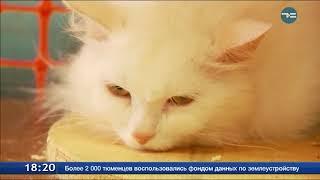 50 кошек ищут новый дом