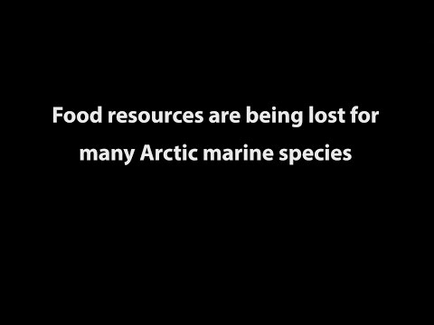 State of the Arctic Marine Biodiversity Report: food resources changing