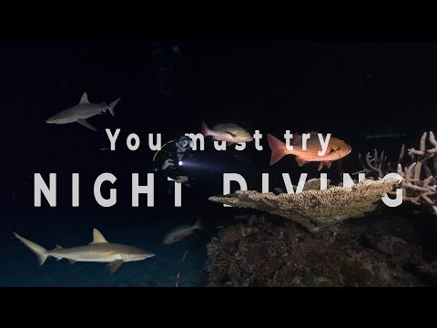 Video Of The Week | Why you must try NIGHT DIVING!