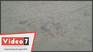 قناديل البحر تظهر فى رأس البر.. ونائب رئيس المدينة يؤكد: غير سامة