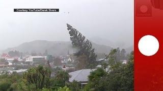 Видео: сильный ветер вырвал с корнем огромное дерево