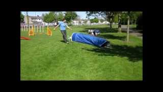 Agility Dogs - Working Trial Club Of Ireland Competition Class
