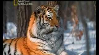 Download LOS ANIMALES MAS PELIGROSOS DEL MUNDO - 5 - ASIA Mp3 and Videos