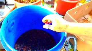 Рецепт БРЕНДИ из винограда, для городских условий. Продукт даже закусывать не надо.