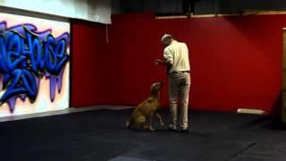 Ashdale Dog Training : Billy Plenderleith : Heelwork : Lrrss