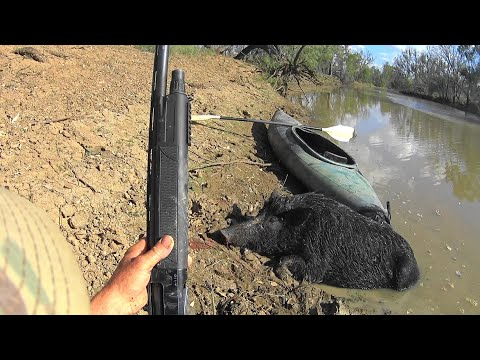 Pig/hog hunting from a kayak in the Outback of Australia.