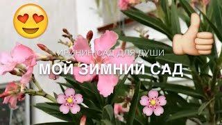 Мой зимний САД🌸//Добро Пожаловать)