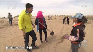 [远方的家]大好河山 探访黄河边的湿地:乌梁素海| CCTV中文国际