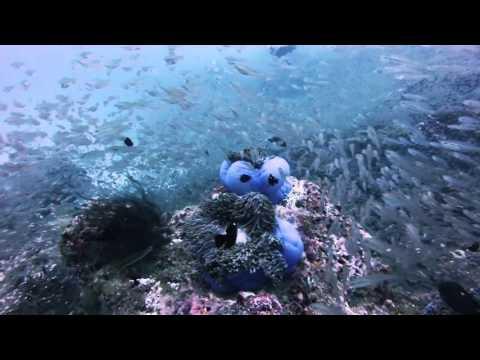 Richelieu rock, Surin Islands, Thailand
