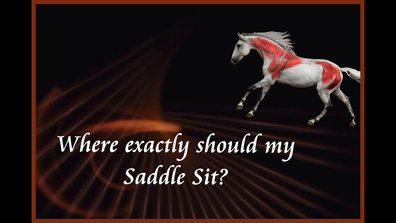 Where Exactly Should My Saddle Sit? by Saddlefit 4 Life®