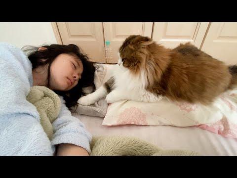 風邪をひいた娘のそばに何となくずっといる猫