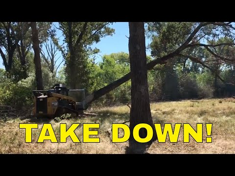 SMALL FORESTRY MULCHER vs HUGE TREES~David and Goliath