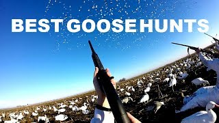 BEST Goose Hunting Moments of 2017