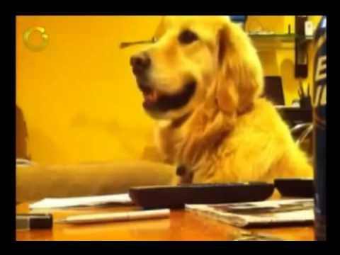 Este perro baila al ritmo de las canciones de Capriles_x264