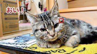 朝になっても帰ってこない飼い主にブチギレて文句を言いにきた猫w