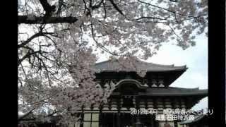 2012年2012年4月 関西周遊さくら便り 撮影石田第一特派員 撮影スポット ...