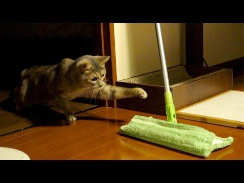 ネコ vs モップ - Cat vs Mop -