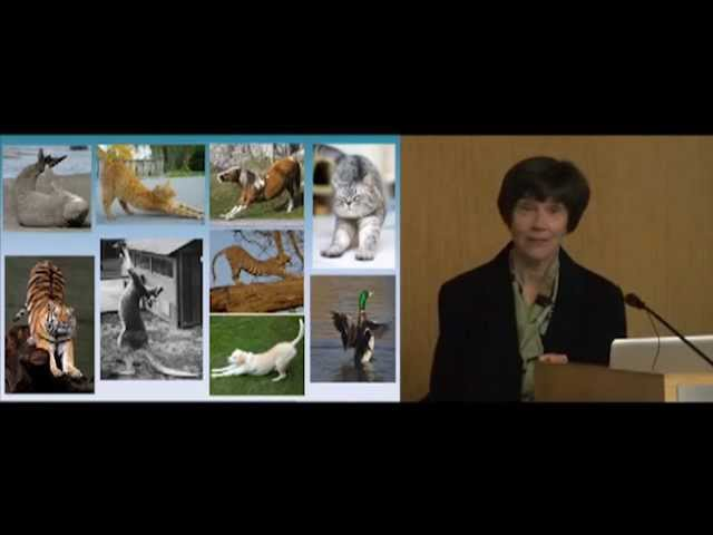 Harvard Medical School Releases HistoricTai Chi Medical Research Lecture for World Tai Chi day