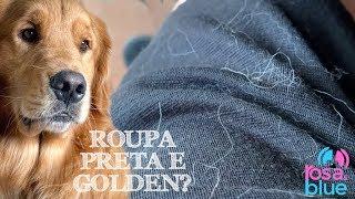 PERDA DE PELOS GOLDEN RETRIEVER I ROSAEBLUE Video