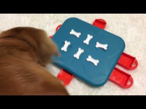 Dog Casino - Nina Ottosson - New