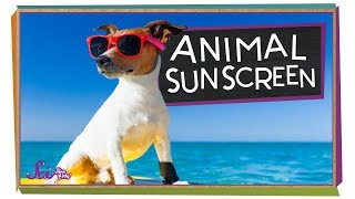 Why Don't Animals Need Sunscreen?