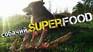 СУПЕРфуд для СОБАК натуральный ПРОТЕИН. Какое мясо лучше давать собаке?