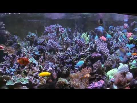 Mike Paletta's 300 Gallon Reef(1) - ReefKeeping Video by AmericanReef - Start a Saltwater Aquarium