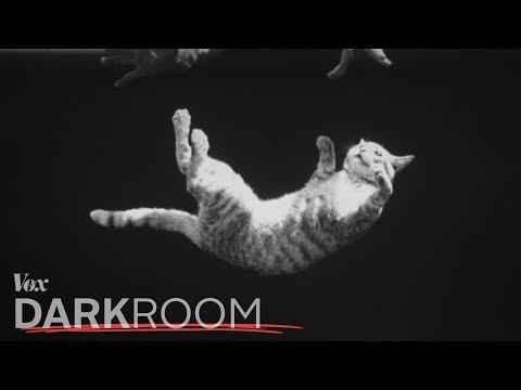 Почему кошки приземляются на лапы (VOX на русском)