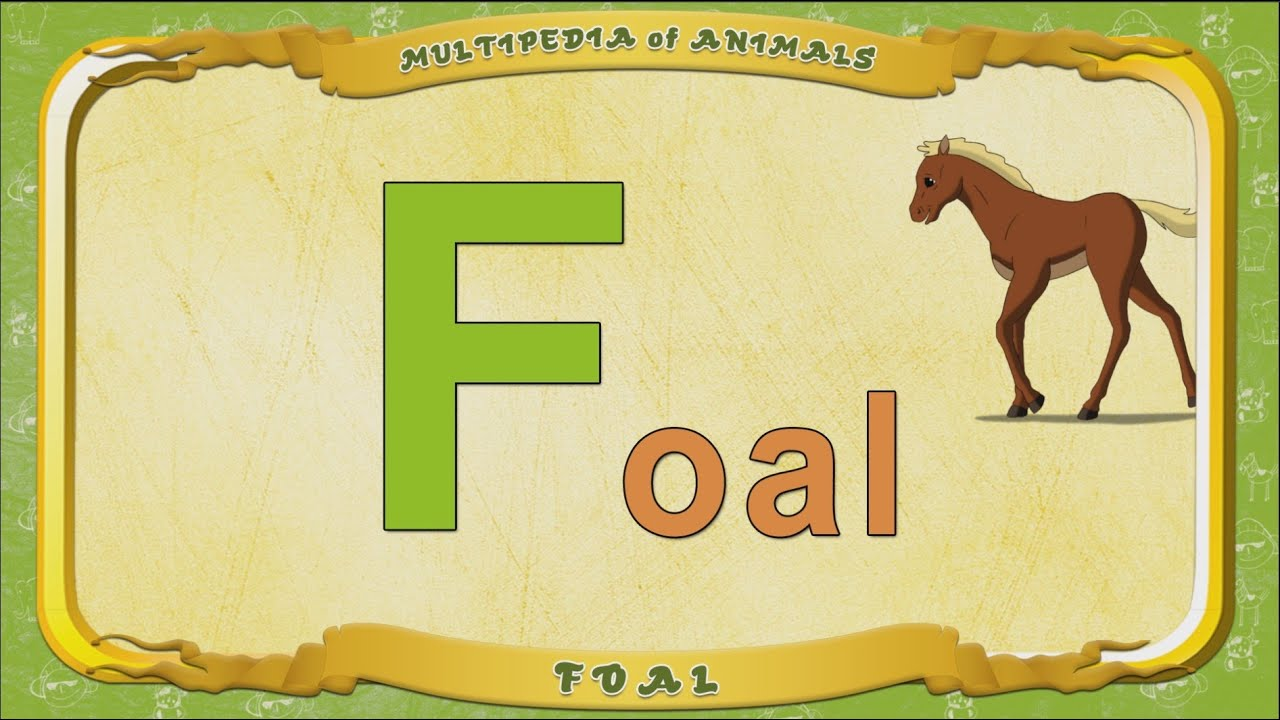 Multipedia of Animals. Letter F - Foal - YouTube