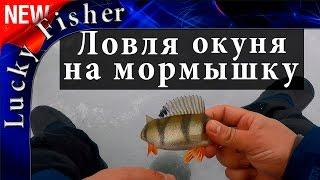 Ловля окуня на мормышку I Подводные съемки / Fshing perch and underwater video