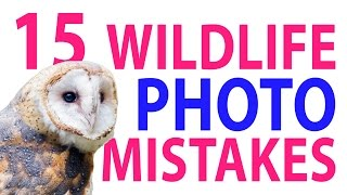 15 Wildlife Photo Mistakes 😱