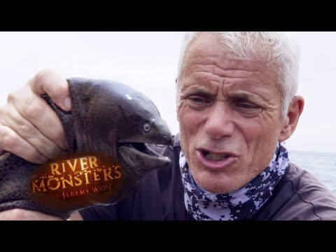 The Strange And Gruesome Moray Eel - River Monsters