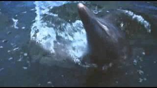 フリッパー (Flipper)