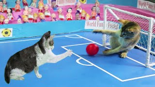 Funny Cat Playing Football  Kitten Play