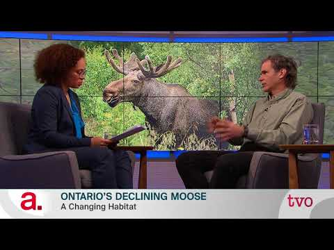 Ontario's Declining Moose
