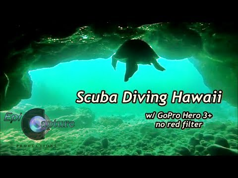 scuba-diving-hawaii-~-flying-with-turtles-~-gopro-hero-3+-no-red-filter