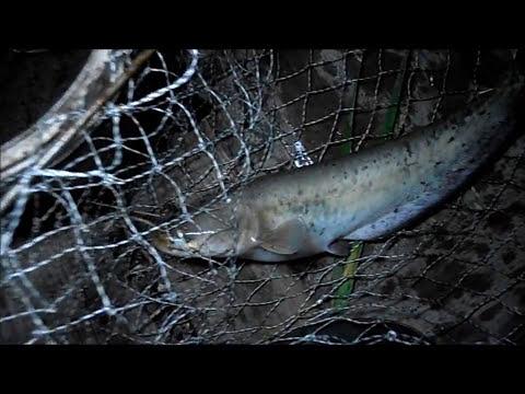 Ловля сома ночью .Снасти,наживка.My fishing .Fishing for catfish at night
